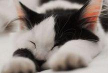 Chats / Les chats les plus beaux