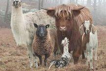 Ma ferme de reve / later als ik groot ben .. en op een boerderij woon ..