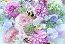Fleurs • Nature