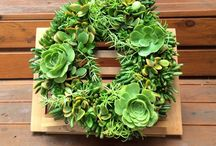For the love of succulents, the Living Wall / Succulents are beautiful, versatile and low-care, make them ideal for living walls and containers. Living walls, indoors or out, are becoming popular as way of increasing our green space. They come in many shapes and sizes to suit small courtyards, replace art work or simply make a grand statement. The possibilities are endless. Perfect for gardeners without a garden.