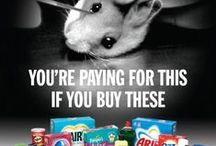 STOP ANIMAL ABUSE!!!!!!