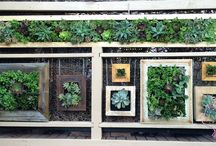 For the love of succulents, the living wall gallery / The Living Wall gallery is one way of adding colour and  depth to a plain looking wall. The framed succulents are beautiful on their own  but together, they look amazing.