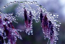 Flowers / Très impressionantes et variées