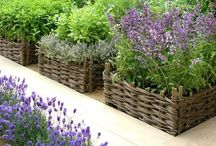 Landscaping Beauty and Function