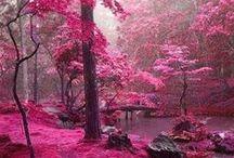 NATURE / Nature color