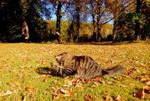 Autumn / • Love this season