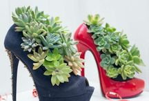 For the love of succulents, the living shoes / #shoeshavesteppedintomylife#This album is a series of shoes, from vintage, weathered and quirky, to fresh, edgy and sleek. It's taking shoe fashion to the next level in the gardening world. It's living, fun, creative, innovative and environmentally friendly.