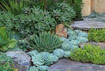 gardening / by Glenda Holdsworth Maltman