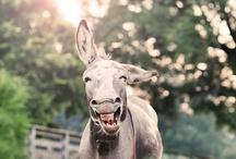 I love Donkeys!! / by Glenda Holdsworth Maltman