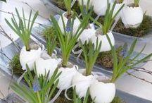Easter - Spring - Voorjaar! / inspiratie voor Pasen, lentekriebels