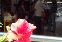 Feria de Flores, Medellín 2012