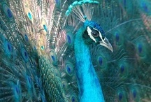 Heroines of a Feather / The Peacock is not shy to spread her feathers and display her unique beauty. The Lark is cheery, appreciating the simple pleasures. The Egret exudes light like an angel while she gently wades along the coast.  What kind of beautiful bird are you?  http://BusinessHeroineMagazine.com