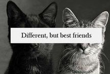 Best Friends Forever and Always ;3 <3