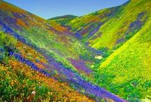 Himalayan Flower Valley