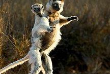 Dancing Animals