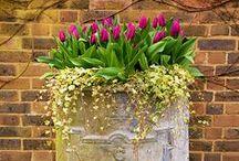 accessory_flowerpot