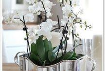 fl_orchids