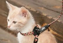 Cat Products / Cat collars, leashes, harnesses, grooming and toys.