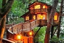 Tree house / whats next?