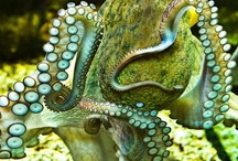 Amazing Animals / by The Beaute' Informer