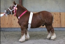 Jutland / country of origin - Denmark | average height 152-165 cm | colours - predominantly chestnut, black, bay/brown | uses - show horse, pulling drays, agricultural work