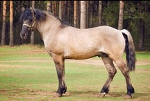 Vyatka / country of origin - Russia | average height 132-152 cm | colours - black, bay/brown, chestnut, dilutes (dun) | uses - general riding, light draught horse