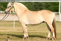 Norwegian Fjord / country of origin - Norway | average height 135-150 cm | colours - dun dilutes only, predominantly bay/brown, black, chestnut, rarely cream dilutes | uses - general riding, farm horse, driving