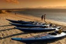 Galapagos Islands / ROW Sea Kayak Adventures offers the only Galapagos Islands tours that allow camping on the islands. We also offer a range of adventure activities during our Galapagos Tours. You'll sea kayak around the Galapagos Islands and explore areas where cruises cannot access. You'll be able to visit the beautiful mountain areas of the islands during hikes led by our experienced guides, You'll come in contact with wildlife, swim off of sunny beaches, and snorkel your way around new worlds.