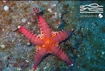Sea Stars / This place is for sharing your Sea Stars photos or to enjoy Sea Stars pictures posted by underwater photographers and scuba divers. Pin Sea Stars images only and respect copyright. If you wish to be added to this board just follow  it or comment any images and we will send you an invite!