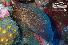 Moray Eels / This place is for sharing your Moray Eels photos or to enjoy Moray Eels pictures posted by underwater photographers and scuba divers. Pin Moray Eels images only and respect copyright. If you wish to be added to this board just follow  it or comment any images and we will send you an invite!