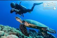 Sea Turtles / This place is for sharing your Sea Turtles photos or to enjoy Sea Turtles pictures posted by underwater photographers and scuba divers. Pin Sea Turtles images only and respect copyright. If you wish to be added to this board just follow  it or comment any images and we will send you an invite!