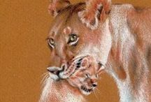 Art Classes: Draw Wild Animals / How to Draw Wild Animals - www.DrawWILDAnimals.com  How to draw & photograph lions, cheetahs, giraffes, zebras, leopards, elephants, and more... Home Study Art Course PLUS Photo safaris - sign up at www.DrawWILDAnimals.com - Use Pinterest to get 10.00 OFF SALE price.