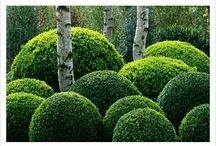 Nur die Harten kommen in den Garten...? / Garten Inspriation, Landschaftsbau Trädgård inspiration och idéer Garden ideas, gardening