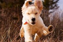 Dogs in Action / Dogs walking, running, playing and having fun