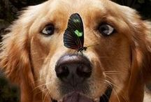 Dog Humor and Wisdom / Funny and wise quotes and pictures about our four legged friends