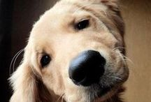 Cute Dogs / Cute photos of pupies and dogs