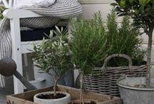 Garden + patio / Patio & garden