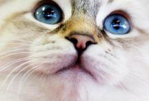 Beautiful Cat breed