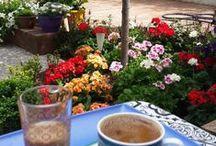 Güzel Bahçem-Garden / #bahçe #peyzaj #düzenleme #bitki #ağaç #doğa #çiçek #gardening