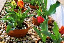 Güzel Çiçeklerim-My lovely flowers / #çiçek, #bitki, #doğa, #bahçe, #peyzaj #park #lanscape