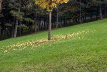 Parklar ve Bahçeler-Parks and Gardens / #Kent Merkezi #Şehir Merkezi #Park #Bahçe #Okul #Çocuk #Hastane #Huzurevi #Spor