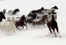 Stampede  / by Ken Day