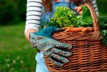 Homes - Gardening tips