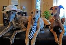 greyhound dogs / by Lucille Guay