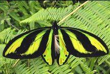 Butterflies / ,-Beautiful  !