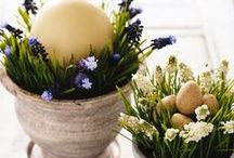 Spring/Easter Celebration / Ideas for Spring/Easter Decorating. / by Kat White