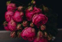 Blumen, Farben& Natur