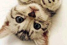 Cats Neko/Picture+Art