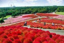 Japan / Travel information about Japan