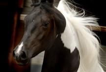 Equestrian moods